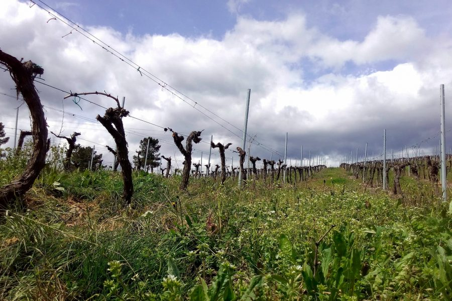 Portomourisco Daterra Viticultores Casas de Enriba 2019