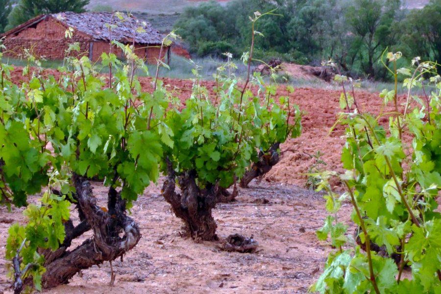 Quintanilla de Tres Barrios junto al paraje del Hoyo en Matanza en la zona norte de Soria.