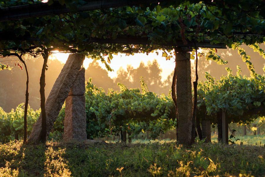 Leirana Finca Genoveva2018 es un monovarietal de la variedadAlbariño. La uva procede de una única finca de viñas viejas de más de 150 años de edad y para su elaboración se realiza una vendimia y selección manual. La vinificación se efectúa de forma tradicional procurando la mínima intervención en el proceso para conservar toda la expresión de la viña, una vez fermentado se realiza un envejecimiento de 12 meses en fudres de roble.
