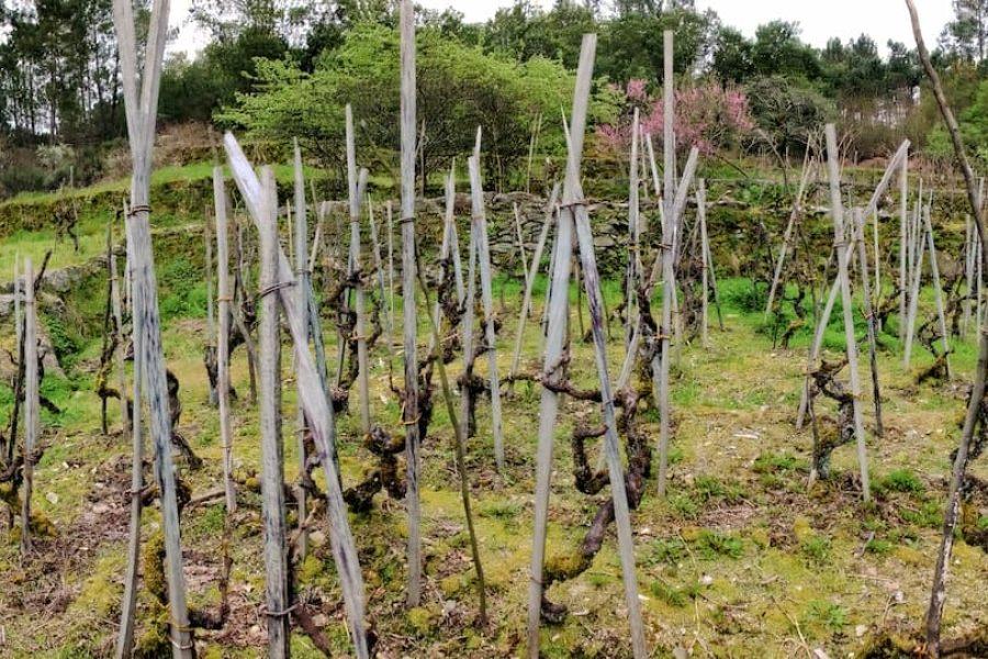 Viño de Encostas Salvaxe 2018 Gomariz