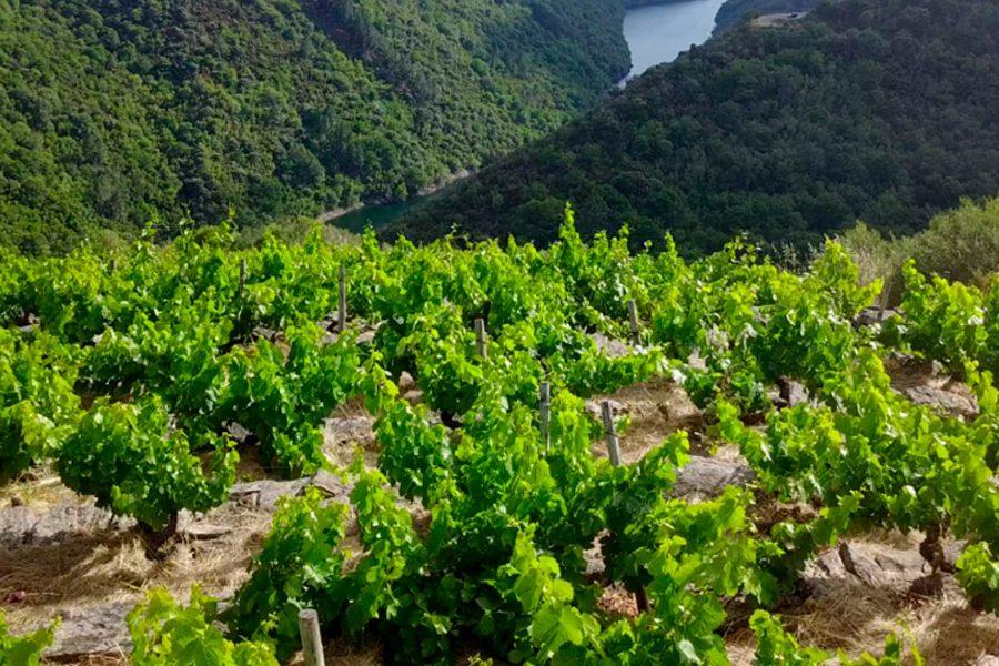 Ribeira Sacra, Tabernario 2018 de Daterra Viticultores.